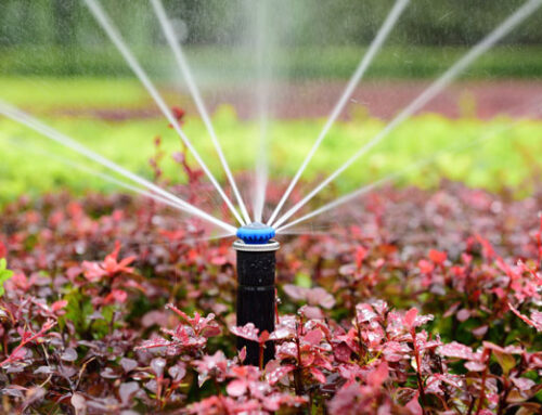 WATERTIGHT GUIDE: WATER RESILIENT GARDENING